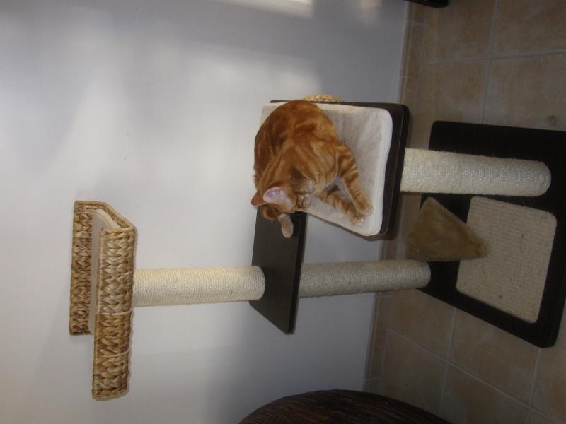 Ghost, petit chaton roux Img_4311