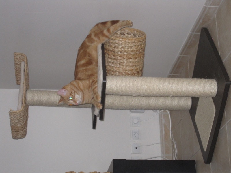 Ghost, petit chaton roux Img_4610