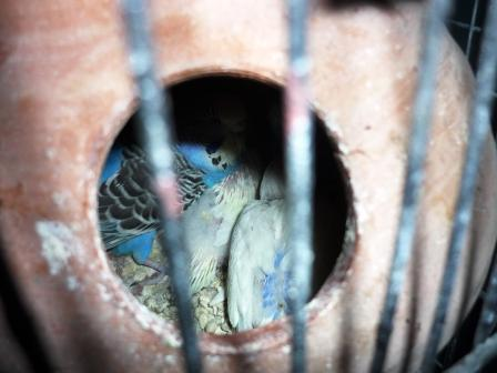 Détention d'oiseaux. 13006910