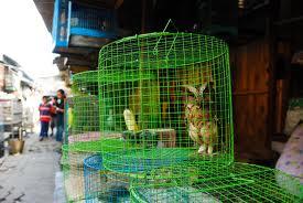 Détention d'oiseaux. Euh_ok10