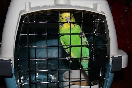 Détention d'oiseaux. Poor_b10