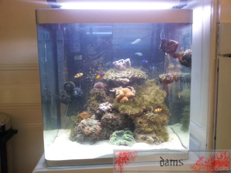 Osaka 155 réicfal by Dams 2012-042