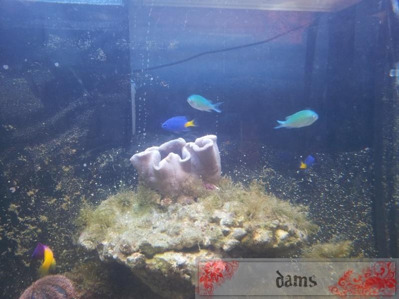 Osaka 155 réicfal by Dams 2012-045