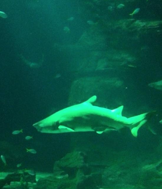 Aquarium Mare Nostrum Montpellier  Captur18