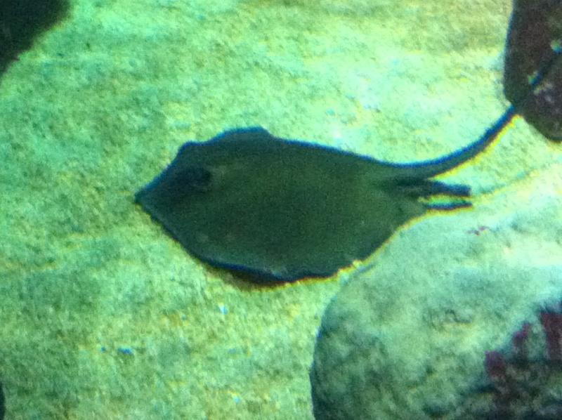 Aquarium Mare Nostrum Montpellier  Img_1911