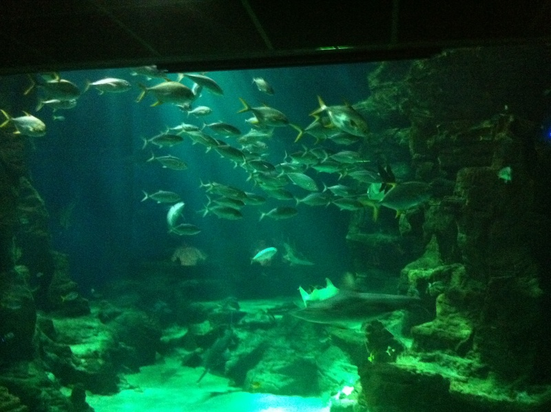 Aquarium Mare Nostrum Montpellier  Img_1915