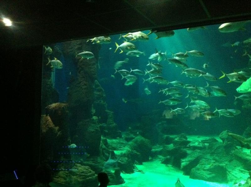 Aquarium Mare Nostrum Montpellier  Img_1916