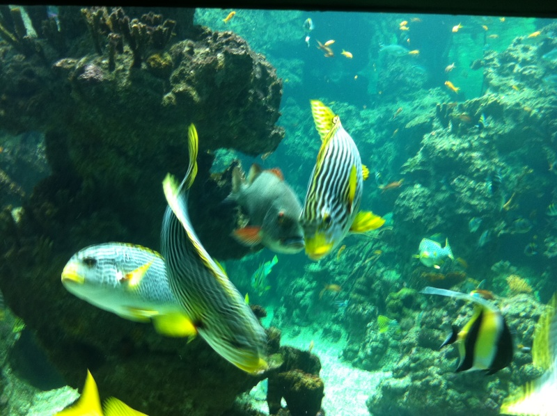Aquarium Mare Nostrum Montpellier  Img_1917