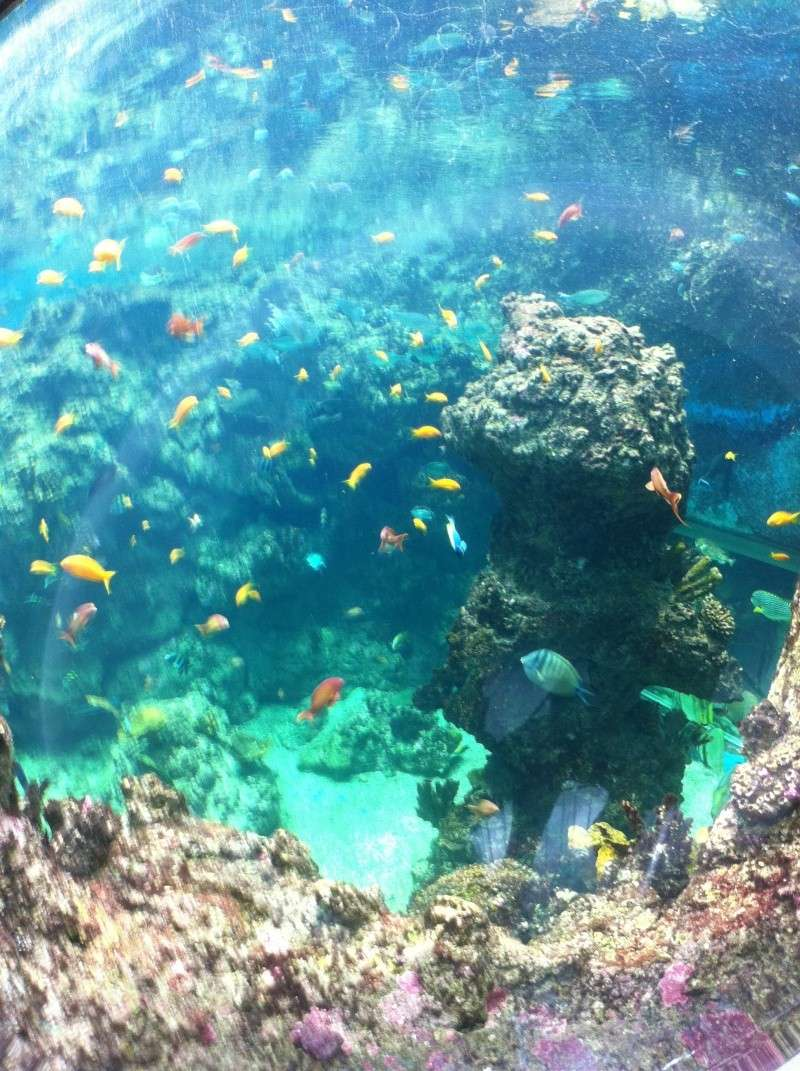 Aquarium Mare Nostrum Montpellier  Img_1918