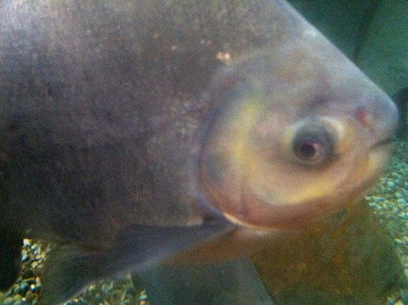 Aquarium Mare Nostrum Montpellier  Img_2010