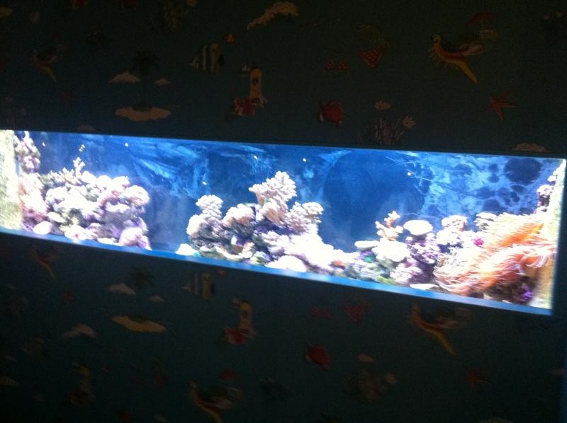 Aquarium Mare Nostrum Montpellier  Img_2014