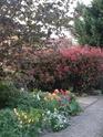 Le jardin de Gisou Dsc00011