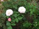 Le jardin de Gisou Gruss_10