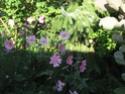 Le jardin de Gisou Img_0223