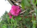Le jardin de Gisou Img_0224