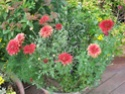 Le jardin de Gisou Potae_10