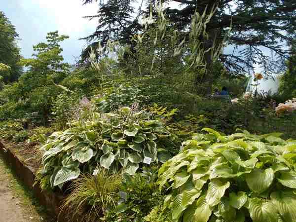 Concours..........'Scènes de jardin' !!! - Page 4 Dscn4511