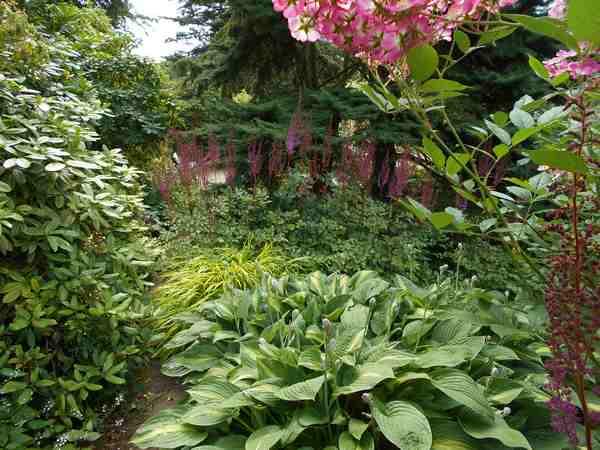 Concours..........'Scènes de jardin' !!! - Page 4 Dscn4512