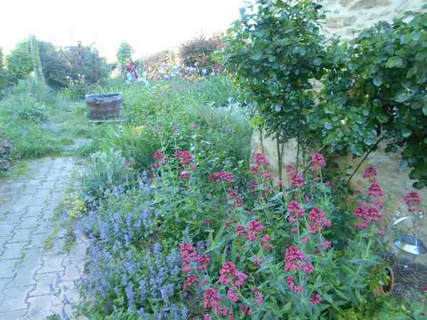 Concours..........'Scènes de jardin' !!! - Page 2 Dscn5529