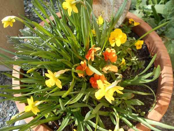 Annonce de printemps !!! Dscn6722