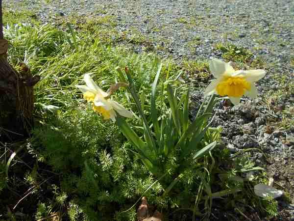 Annonce de printemps !!! Dscn6723