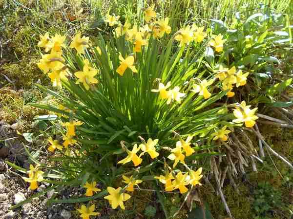 Annonce de printemps !!! Dscn6724