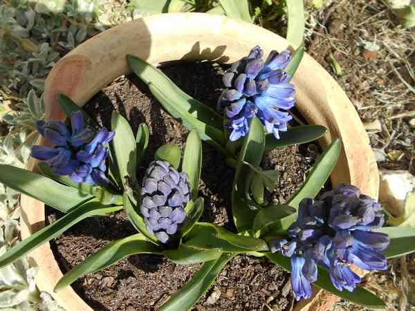Annonce de printemps !!! Dscn6725