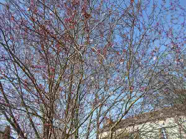 Annonce de printemps !!! Dscn6727