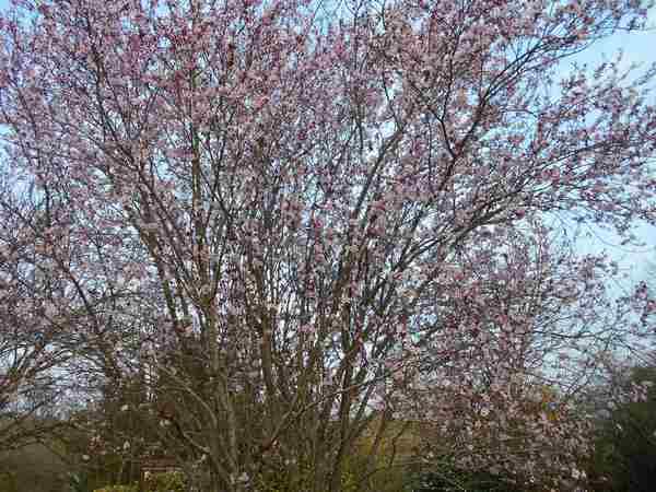 Annonce de printemps !!! - Page 3 Dscn6733
