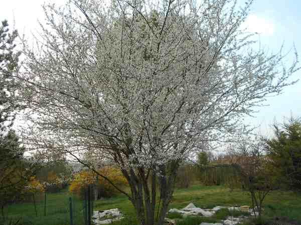 Annonce de printemps !!! - Page 3 Dscn6734
