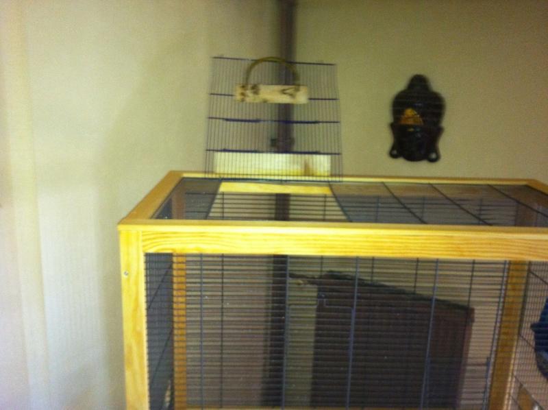 Question de cage Img_0317