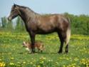 (dpt 23)PRINCUS, âne typé catalan de 5 ans, entier en FA chez Banzina Dsc02311