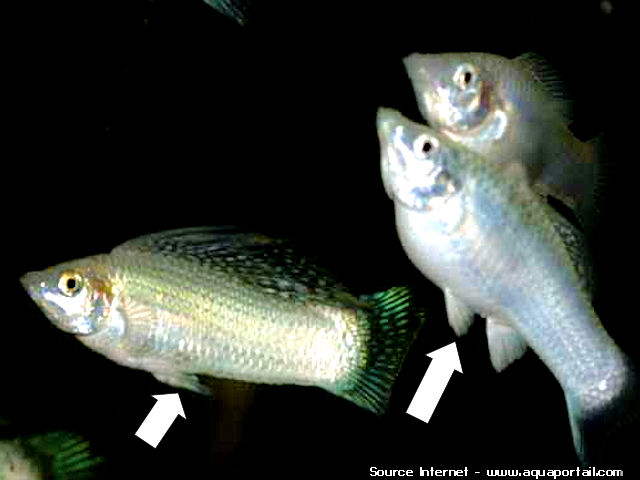 mon aquarium 2 Anemon10