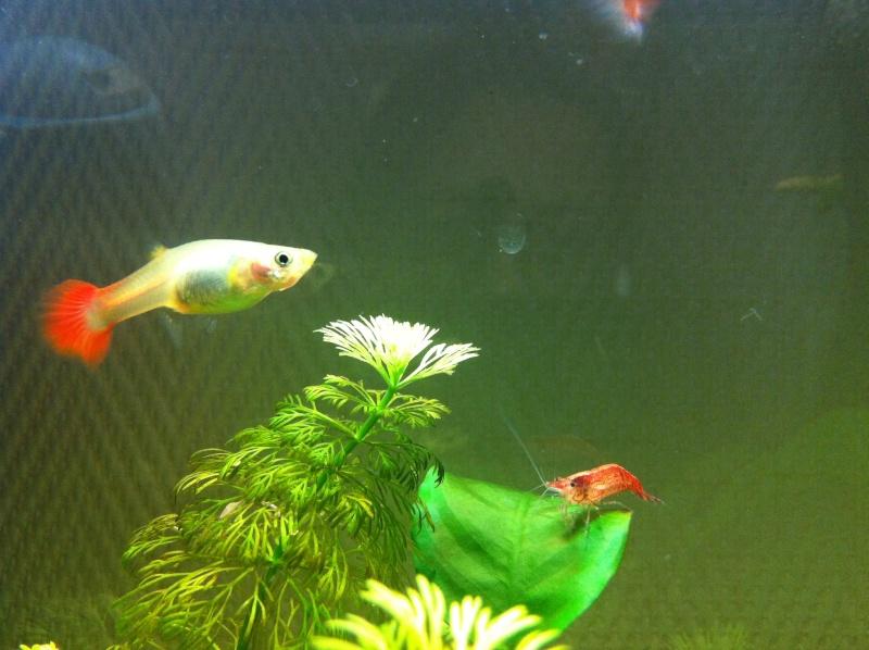 Mon premier aquarium (20 L) Femell10
