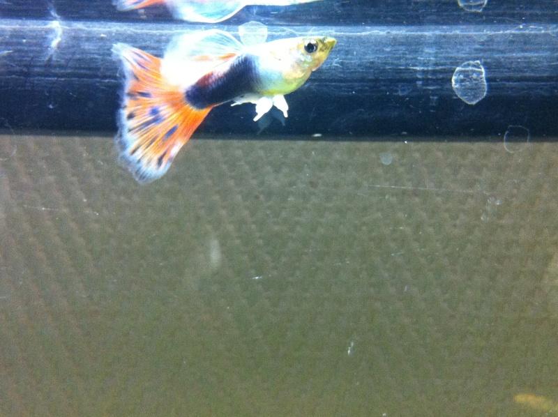 Mon premier aquarium (20 L) Le_mal10