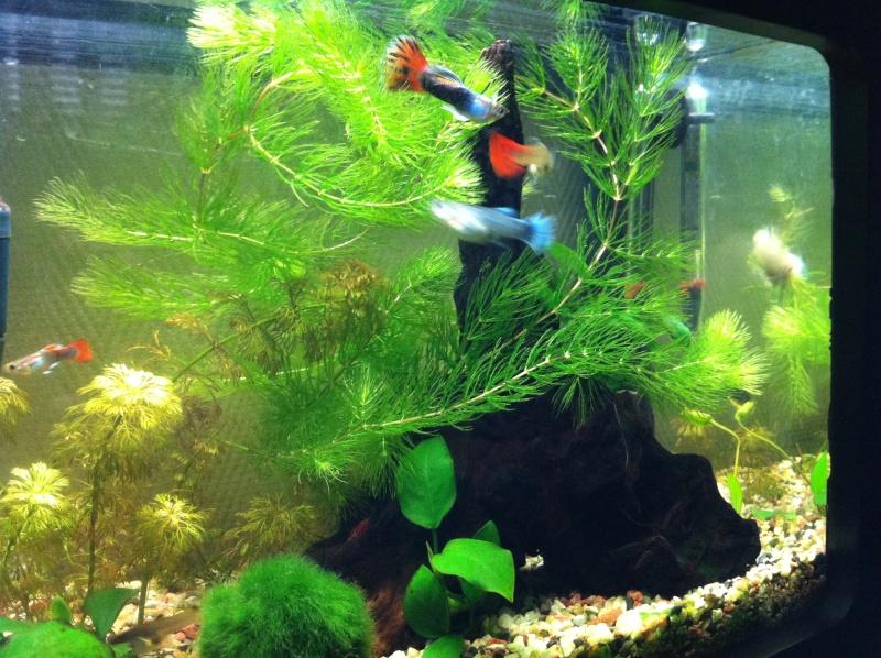 Mon premier aquarium (20 L) Vue_d_14