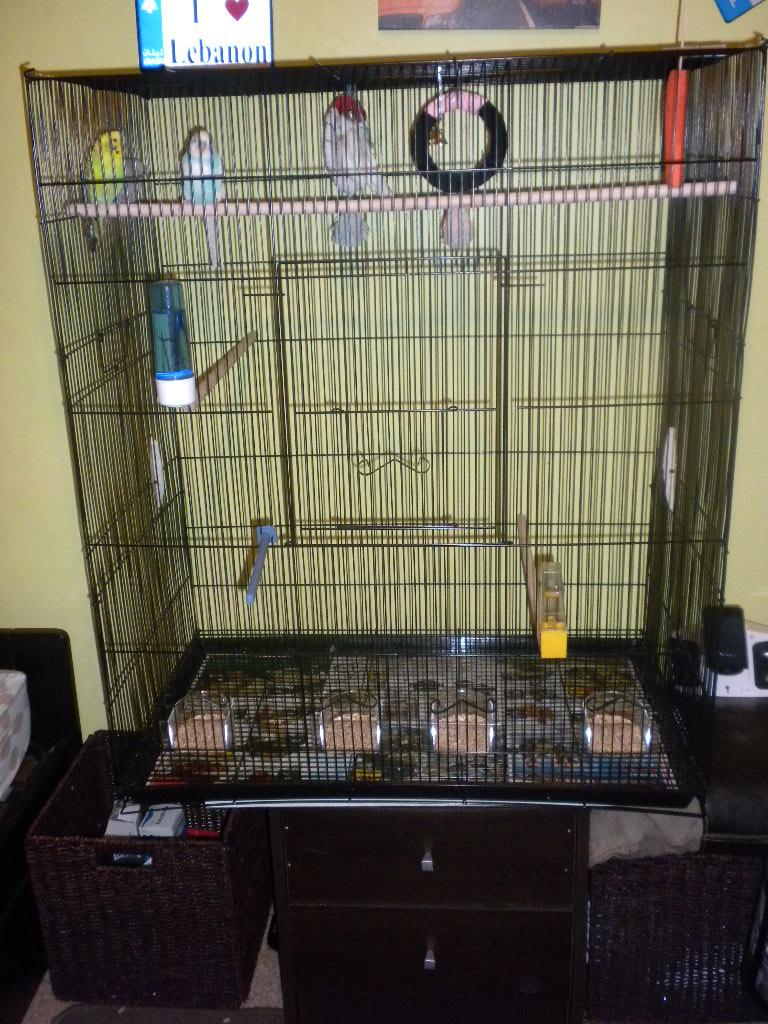 Vos avis sur ces cages pour un couple de perruches - Page 4 Dscn1711
