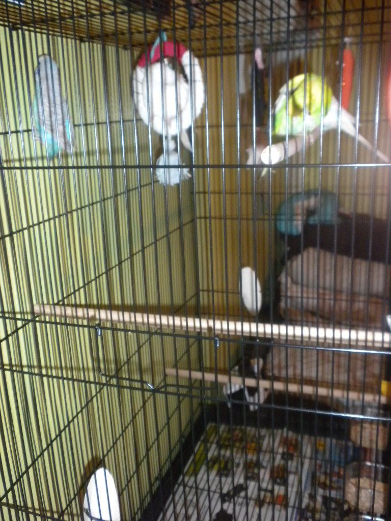 Vos avis sur ces cages pour un couple de perruches - Page 4 Dscn1712