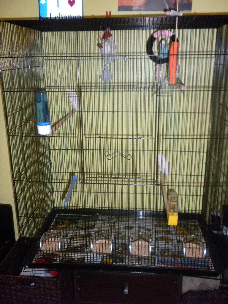 Vos avis sur ces cages pour un couple de perruches - Page 5 Dscn1713