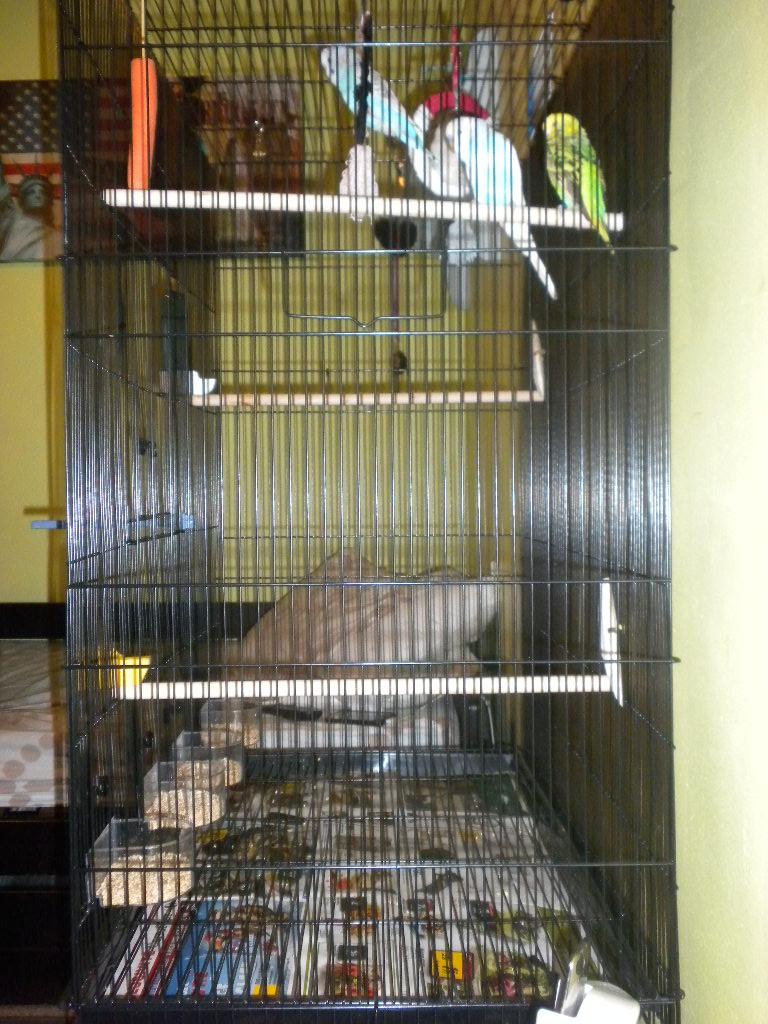 Vos avis sur ces cages pour un couple de perruches - Page 5 Dscn1714