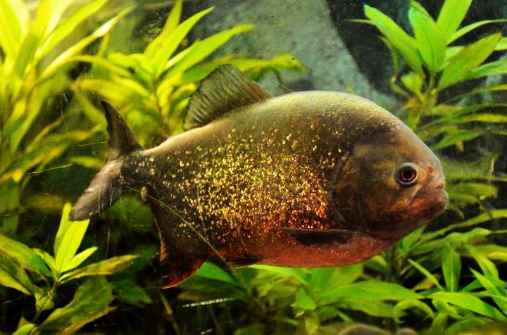 """Concours photos """"le poisson et son environnement aquatique"""" - Oscar le poisson  - Page 3 30804010"""
