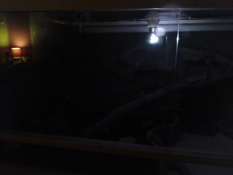 ampoule de nuit Img_2027