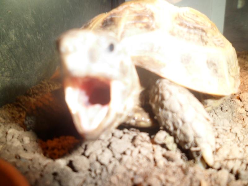 URGENT tortue qui a perdu 1/3 de son poids  Tortue10