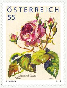 Heimische Blumen Rose12
