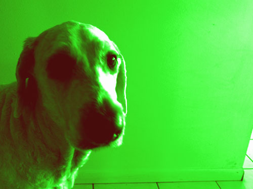 Assignment 5: Gradient Maps on a full color photo Gradie10