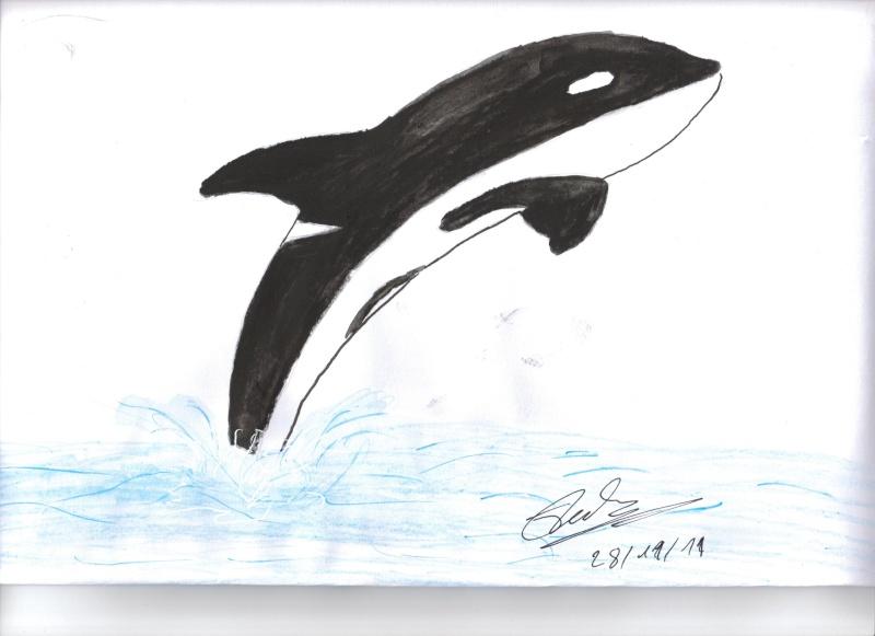 (dessin) dessin d'orque Premie10