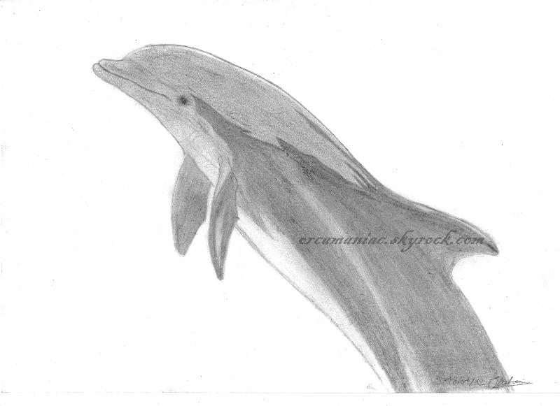 (dessin) dessin d'orque - Page 2 Sans_t10