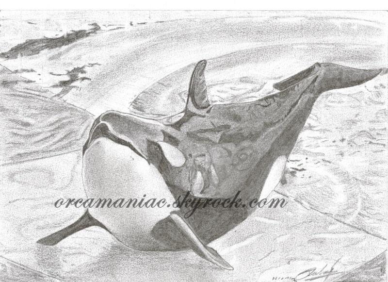 (dessin) dessin d'orque - Page 2 T10