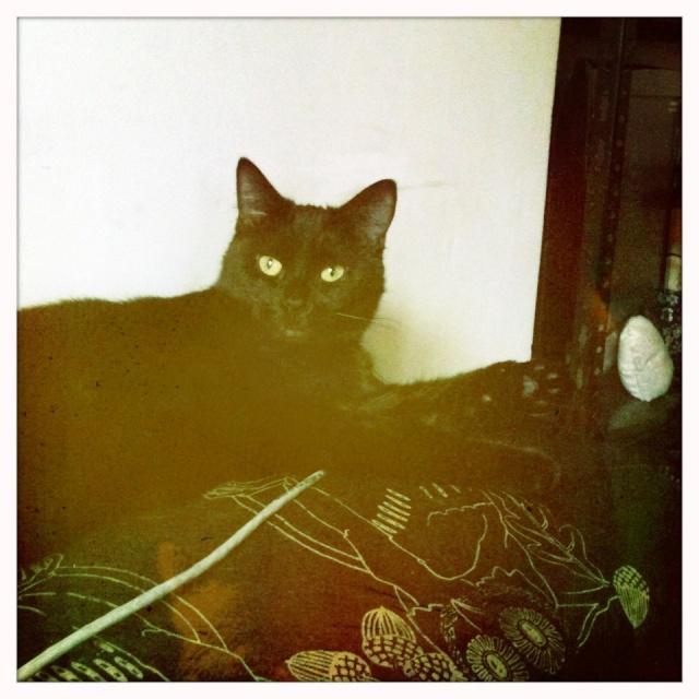 Photos de chattes poilues blacks.