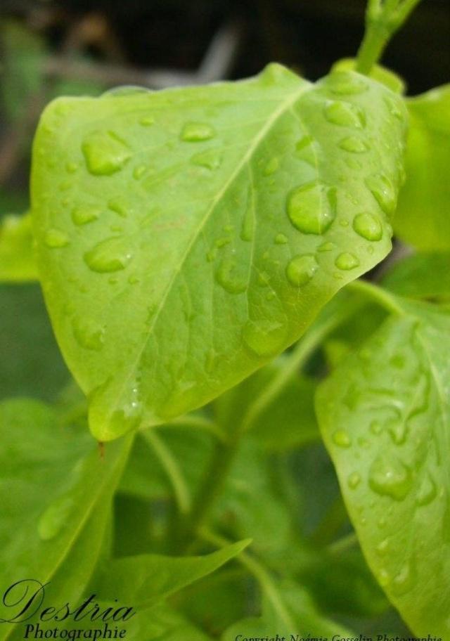 Destria Photographie - Végétaux Destri13